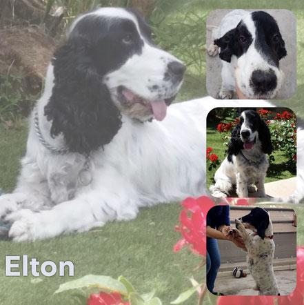 ELTON adopté en Avril 2019