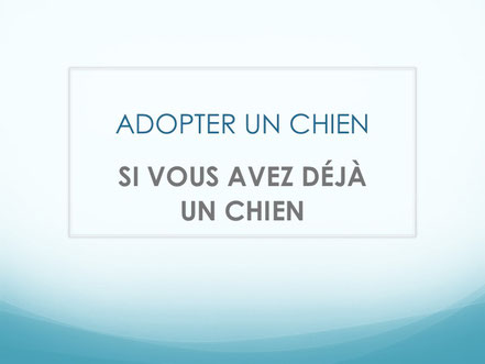 Adopter un chien SENIOR