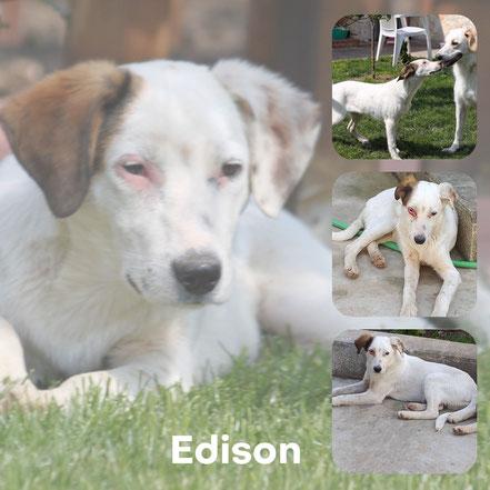 Edison adopté en Juin 2020