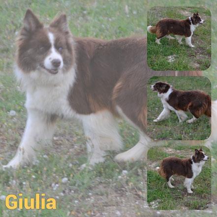 Giulia adoptée en Septembre 2020