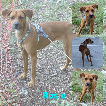 Rosie adoptée en Octobre 2020