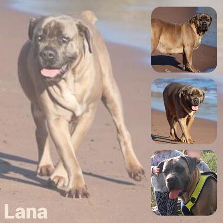 LANA adoptée en Mai 2019
