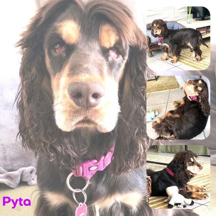 PYTA adoptée en Juin 2019