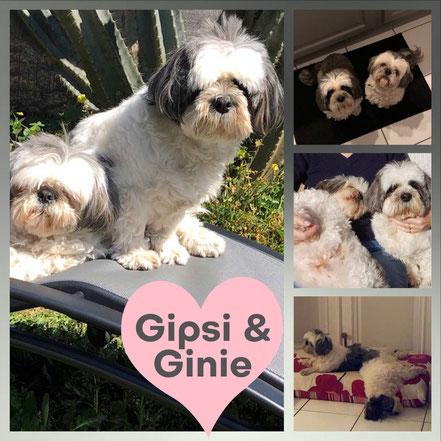 GINIE & GIPSI adoptés en Avril 2019