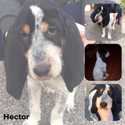 HECTOR adopté en Mars 2017