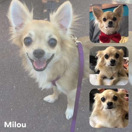 MILOU adopté en Septembre 2017