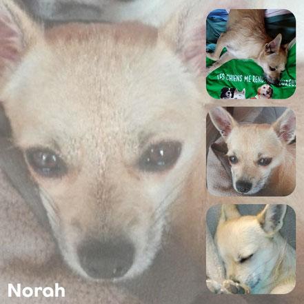 NORAH adoptée en Septembre 2017