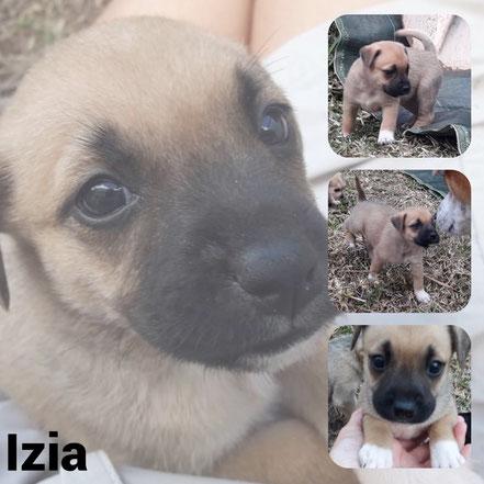 Izia adoptée en Octobre 2020