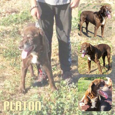 PLATON décédé le 17 Juin 2019