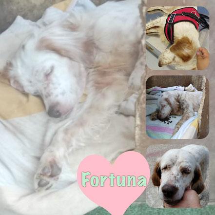 FORTUNA décédée en Février 2019