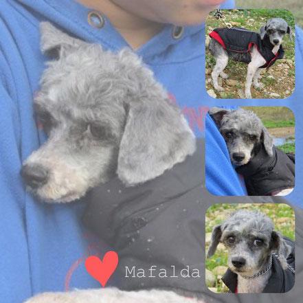 MAFALDA adoptée en Novembre 2018