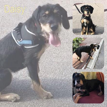 DAISY adoptée en Février 2019