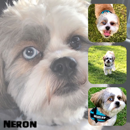 NERON adopté en Mai 2018