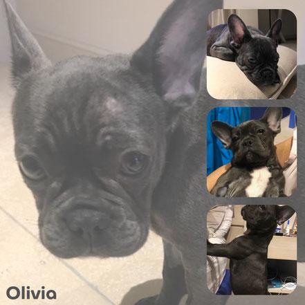 OLIVIA adoptée en Décembre 2017