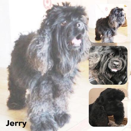 JERRY adopté en Juin 2017