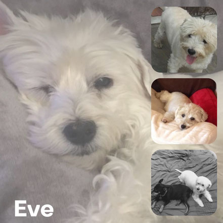 EVE adoptée en Avril 2018