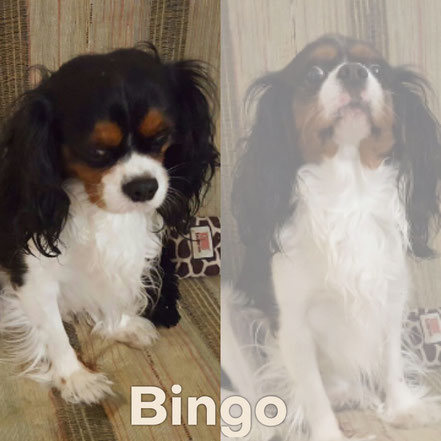 BINGO adopté en Mars 2017