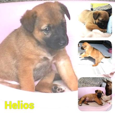 Helios adopté en Juillet 2020