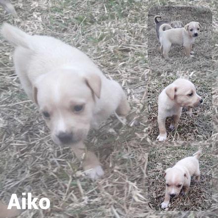 Aiko adopté en Octobre 2020