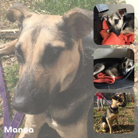 MANEA adoptée en Juin 2017 - RIP