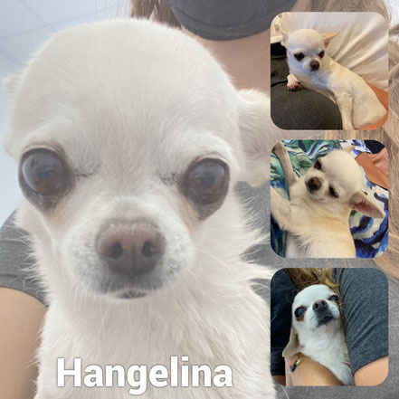 Hangelina adoptée en Septembre 2020