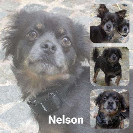 Nelson adopté en Aout 2020