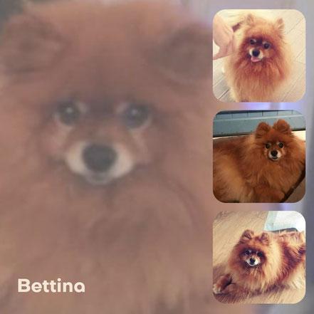 BETTINA adoptée en Décembre 2017