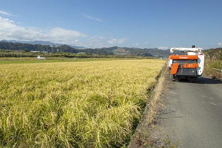 春はひとり先駆けて、荒起こしのために蔵から出ていく亮太さん。秋は最後まで、ひとり稲刈り作業のため蔵を出てくる。