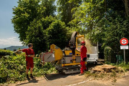 Raupenhacker, Baumpflege Baumschnitt Pflanzung Strunkfräse Stockfräse Holzhacker Henzelmann