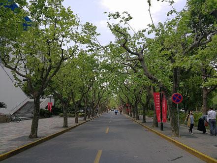 華東師範大学のキャンパスは夏の暑さを遮るように沿道には多くの木が植えられています。