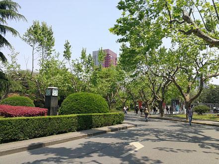 華東師範大学は「ガーデニングキャンパス」と呼ばれ植木の手入れが行き届いています。
