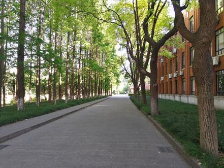 華東師範大学   国際交流服務センター入り口前の並木道