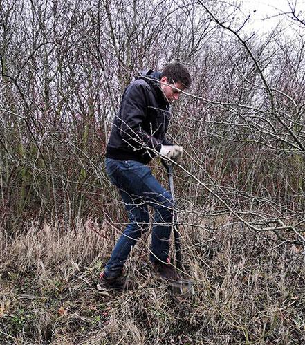 Schon beim Ausgraben der Gehölze hat Simon Hinrichs...