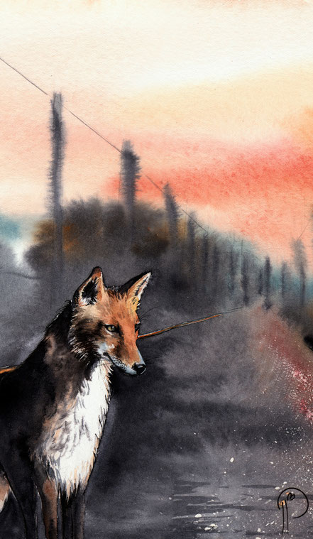 renard, nuit, illustration, aquarelle, nature, naturaliste, animalière