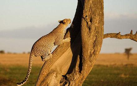 6-day-tanzania-safari.jpg