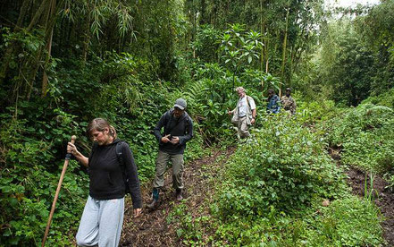 gorilla-habituation-experience-uganda-tour.jpg