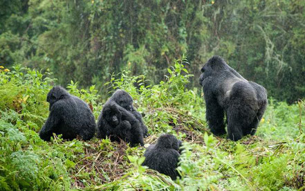 6-day-gorilla-trekking-safari.jpg