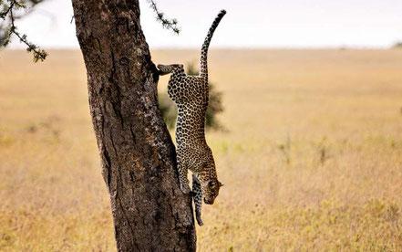 7-day-tanzania-safari-serengeti.jpg