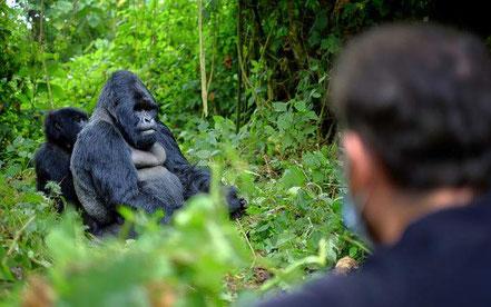5-days-bugdet-gorilla-trekking-tour-and-chimpanzee-trekking-safari-to-Uganda.jpg