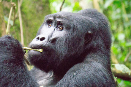 9-days-gorilla-trekking-tour.jpg