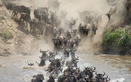 3-day-tanzania-safari-ngorongoro-tarangire-lake-manyara.jpg