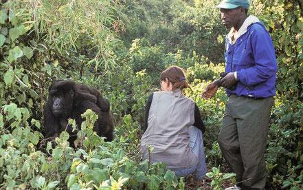 3-day-budget-gorilla-trekking-safari.jpg