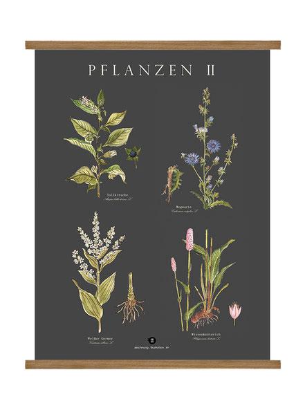 Pflanzenlehrtafel, Pflanzen,Vogellehrtafel, Vogelillustration, Vogelzeichnung, Vintage, Poster