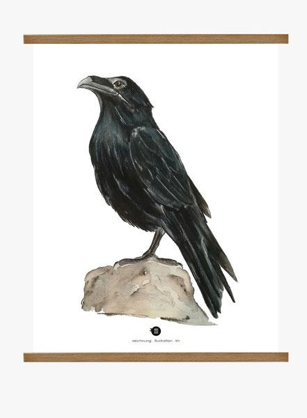 Pflanzenlehrtafel, Vogellehrtafel, Vogelillustration, Vogelzeichnung, Vintage, Poster