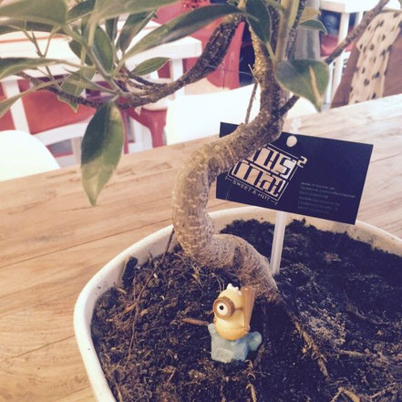 09 | Minion erobert unseren Bonsai