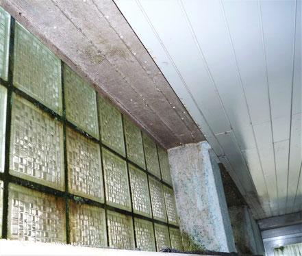 Schimmel und Algen an Glasbausteinen und der Fensterleibung
