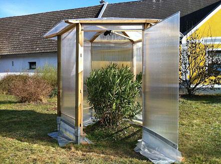 Oleander Haus, Oleander Freiland, Wie Vorfrühling, im Freiland, überwintern