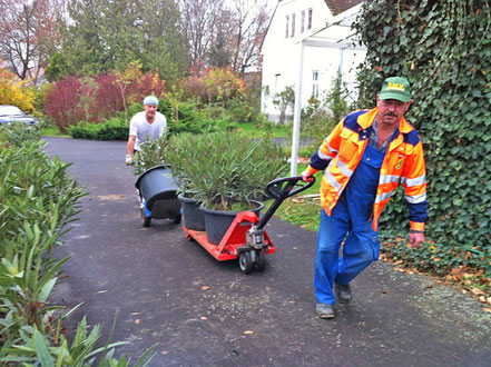Die Oleanderbüsche von der Straße in Rax werden zurück zu OLEANDER HAUS gebracht.