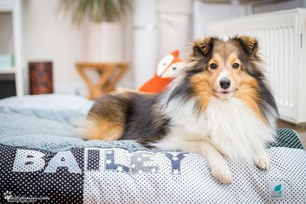 Hundedecke mit Namen & Hundebett