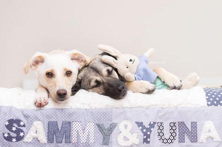 Hundedecke mit Namen